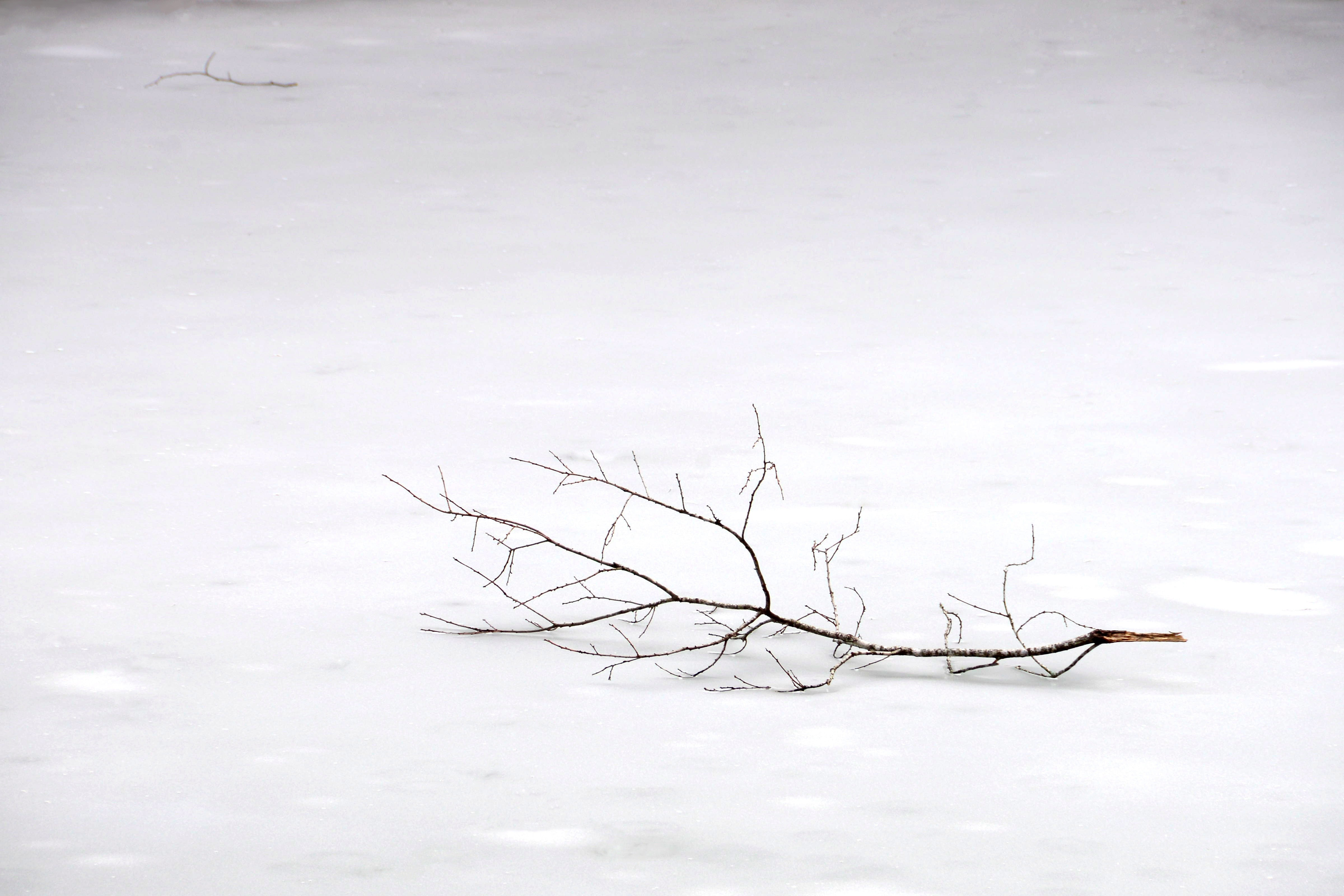 winter branch
